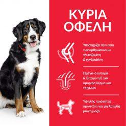 DOG_Adult_Large_Chicken_Transition-Benefits
