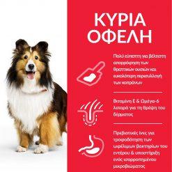 DOG_Adult_Medium_Stomach_Skin_Chicken_Transition-Benefits