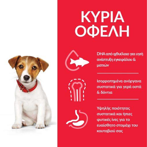 DOG_Puppy_S_M_Chicken_Transition-Benefits